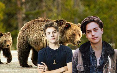 StatSocial Digital Tribes — Zacks & Codys & Bears, Oh My!